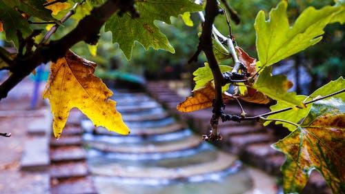 Free stock photo of landscape autumn