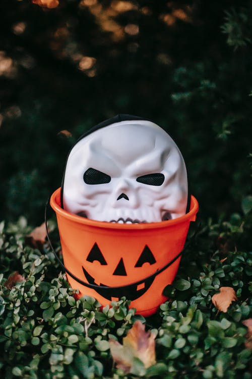 Scary skeleton mask for Halloween placed in plastic bucket painted as jack o lantern located on green leaves on Autumn day