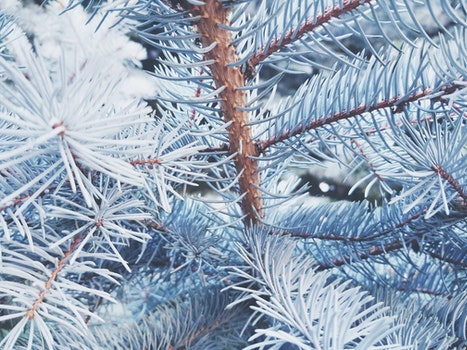 Free stock photo of branches, plant, tree, season