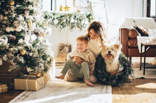 Darmowe zdjęcie z galerii z boże narodzenie, choinka, dekoracje świąteczne