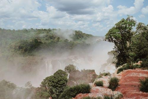 Kostenloses Stock Foto zu argentinien, baum, dampf, draußen