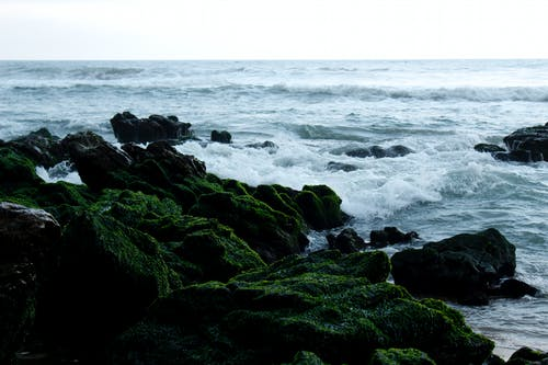 Free stock photo of sea, sea beach, seashore