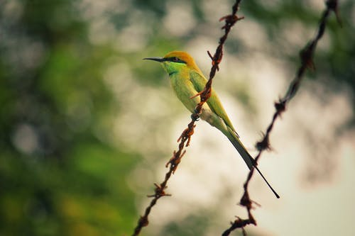 Selective Focus Photography of Green Bird on Barb Wire
