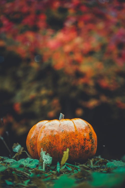 Orange Pumpkin in Close Up Photography