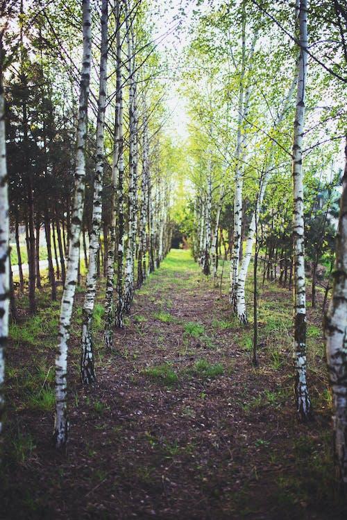 Gratis arkivbilde med årstid, flora, frodig, gren
