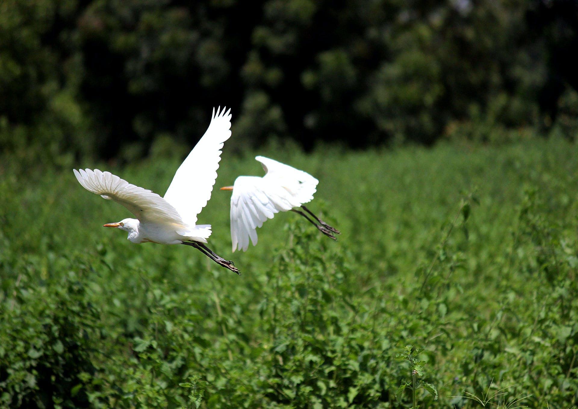 Free stock photo of bird, flying, animal, fauna