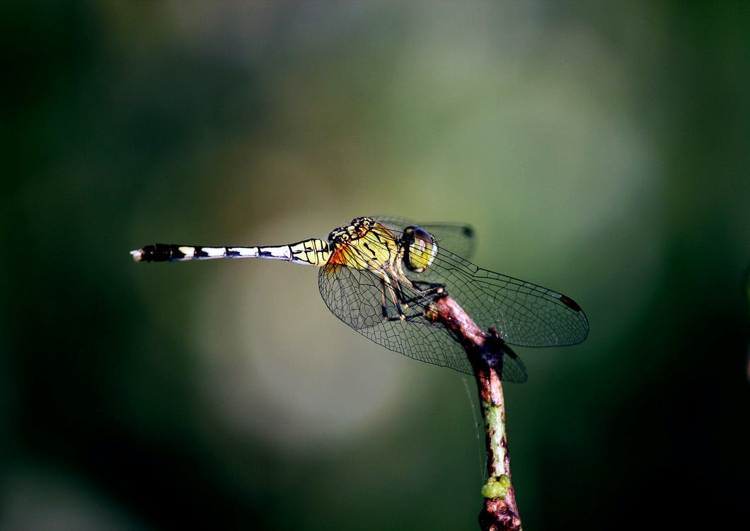 hmyz, křídla, příroda