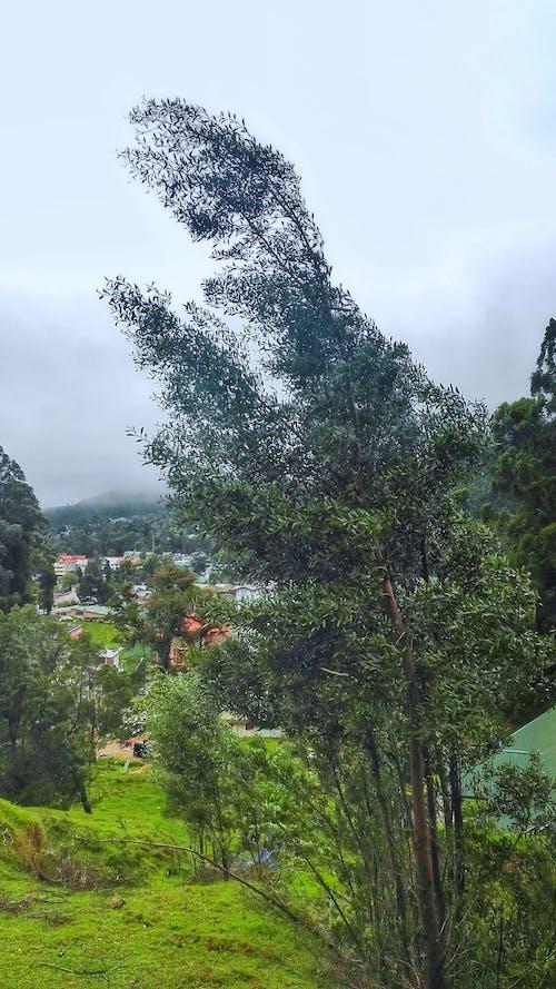 山, 村莊, 綠色 的 免費圖庫相片