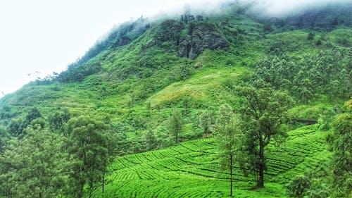 山, 岩石, 樹木, 綠色 的 免費圖庫相片