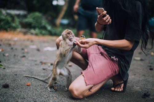 Brown Monkey Sitting on Womans Lap