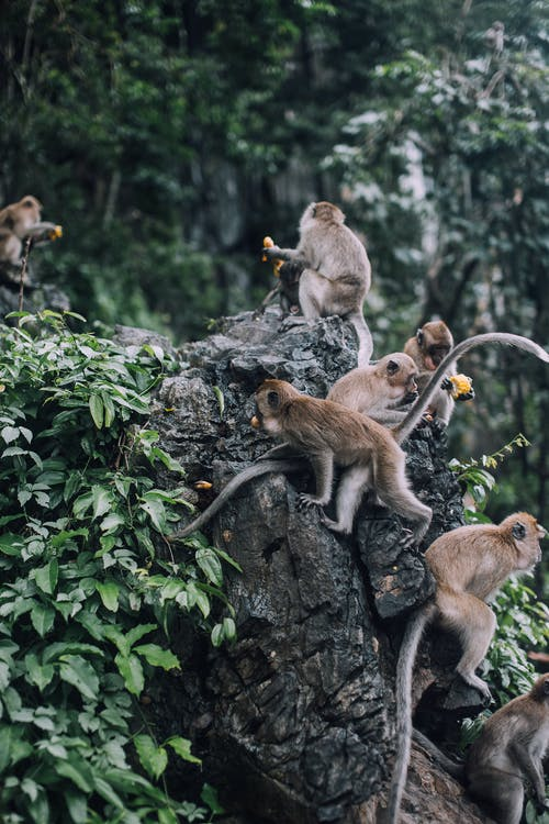 Brown Monkeys on Tree Branch