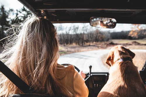 Kostenloses Stock Foto zu ausflug, auto, blondes haar