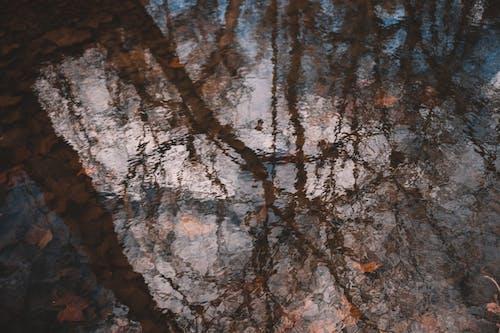Kostenloses Stock Foto zu abstrakt, abstraktes ölgemälde, baum
