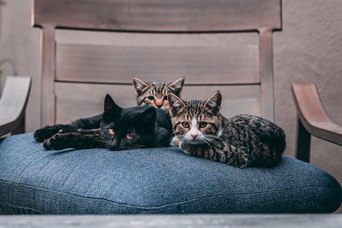 Kostenloses Stock Foto zu auge, bett, drei katzen