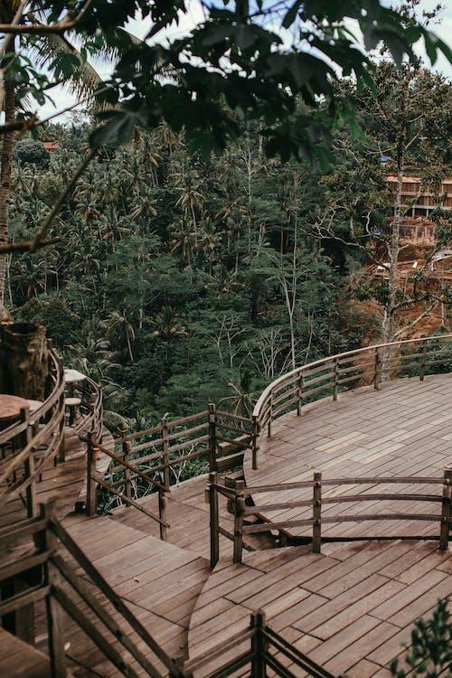 Imagine de stoc gratuită din arbori, brun, cafeniu