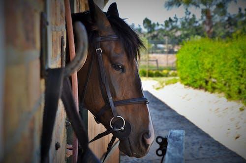 Δωρεάν στοκ φωτογραφιών με αγρόκτημα, αγροτικός, άλογο, εξοχή