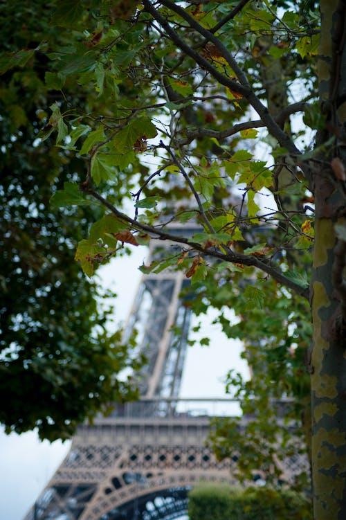 Darmowe zdjęcie z galerii z paryż, wieża eiffla