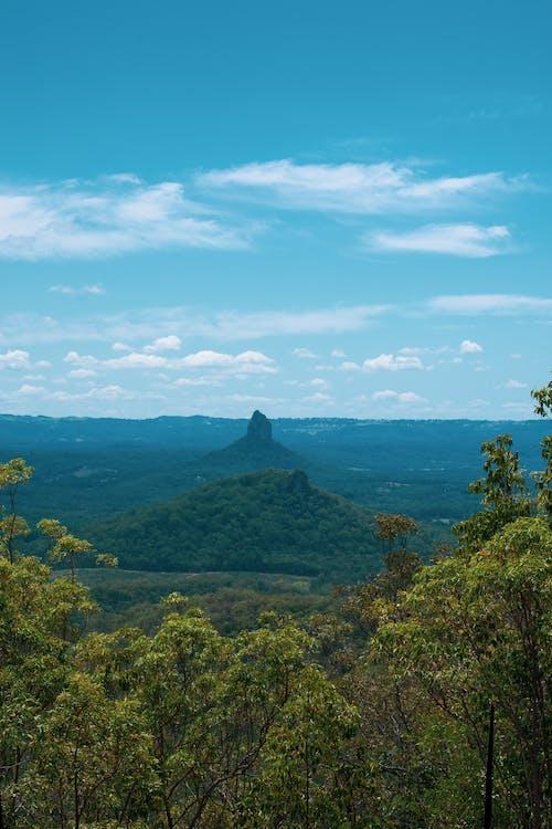 Immagine gratuita di alberi, australia, cielo, foresta