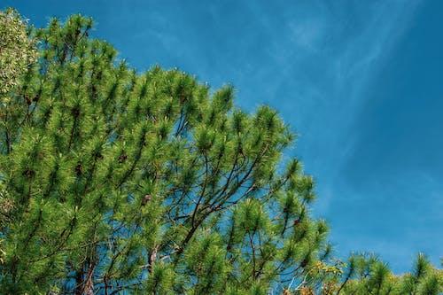 Immagine gratuita di albero, azzurro, blu, cielo