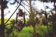 light, nature, vintage