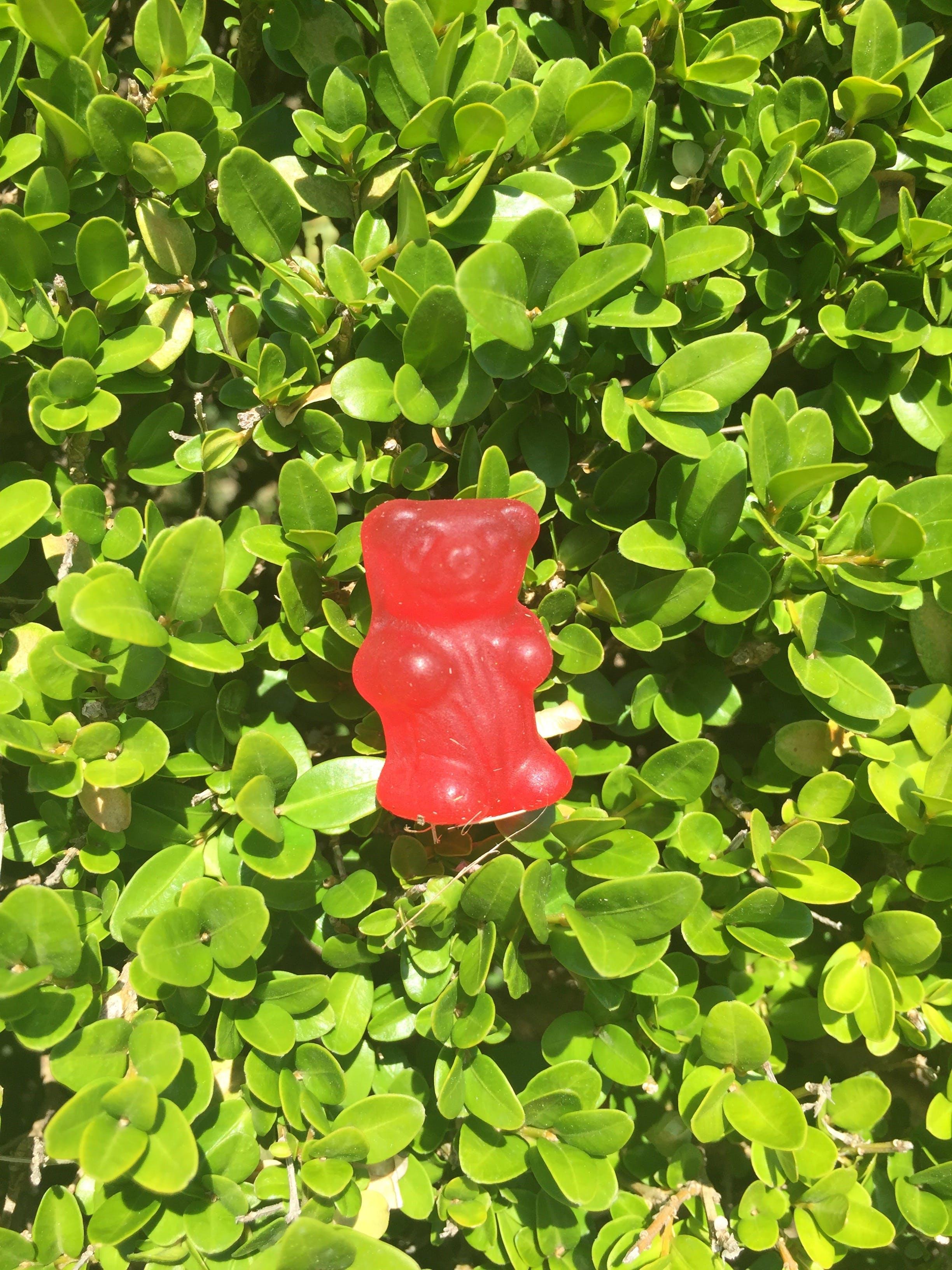 Free stock photo of bear, grass