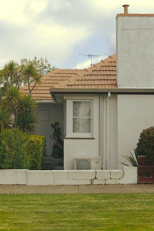 Green Palm Tree Beside White Concrete House