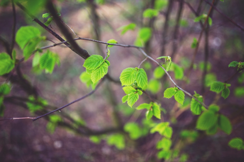Young little leaves