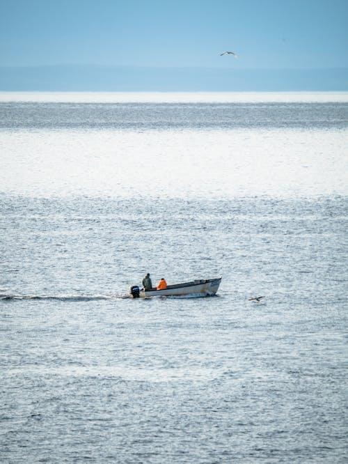 Бесплатное стоковое фото с бухта португалия, ньюфаундленд, рыболовное судно
