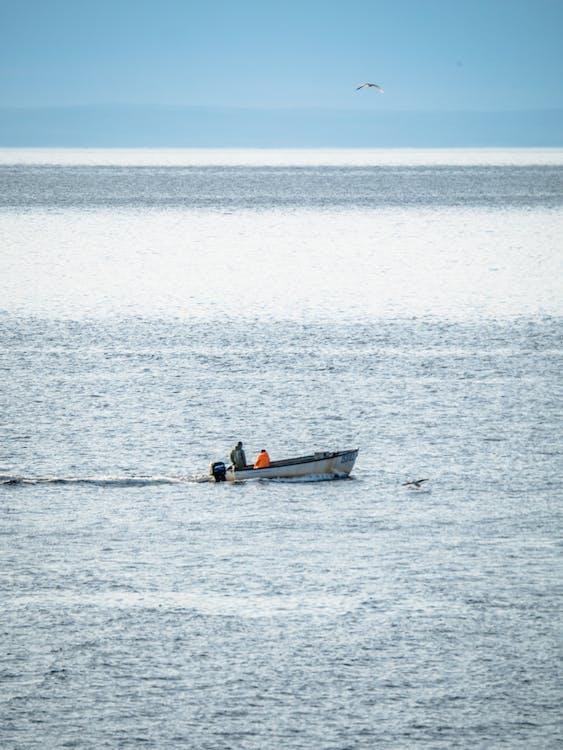 Δωρεάν στοκ φωτογραφιών με αλιευτικό σκάφος, νέα γη, πύργος της πορτογαλίας