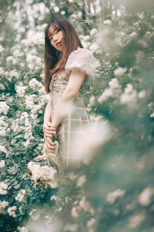 中國女孩, 人像攝影, 優雅, 光鮮亮麗 的 免費圖庫相片
