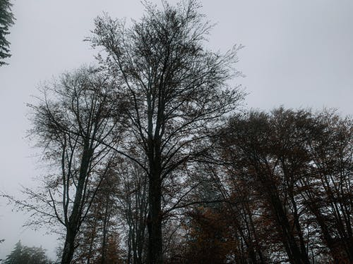 Leafless trees in autumn park