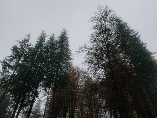 Tall trees in park in gloomy day