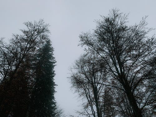 From below of leafless trees in mixed forest on gray sky background in autumn dusky time