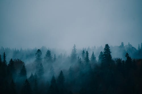 Drone view of magnificent landscape with tops of trees in coniferous forest covered mist in dusk