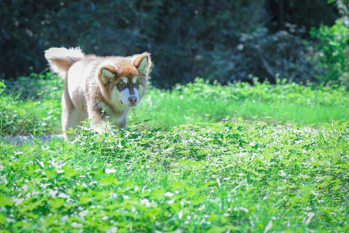 Ilmainen kuvapankkikuva tunnisteilla koira