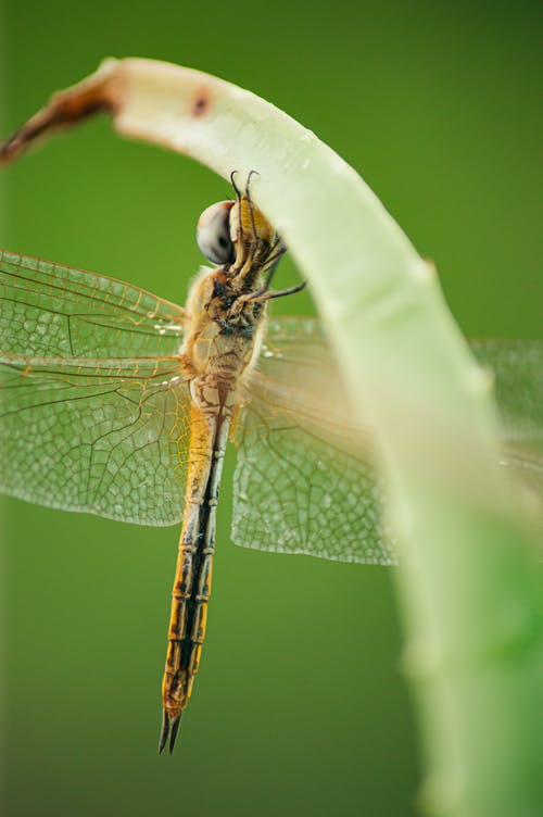 Dragonfly with transparent wings resting on plant stem