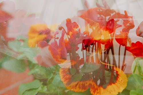 Through glass view of bright blossoming flowers growing on thin stems at home in daylight