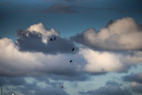 Free stock photo of above clouds, birds, birds flying