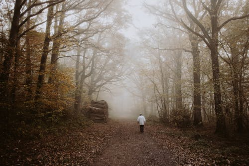 Unrecognizable man walking on path between foggy trees in autumn