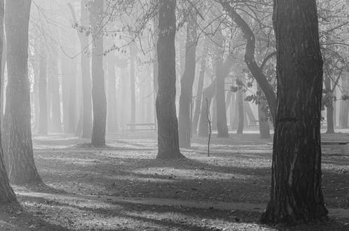 Monochrome Photo of Trees in a Park