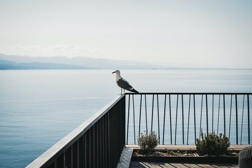Full body gray seagull standing on embankment railing against picturesque tranquil sea washing  rocky shore on clear weather
