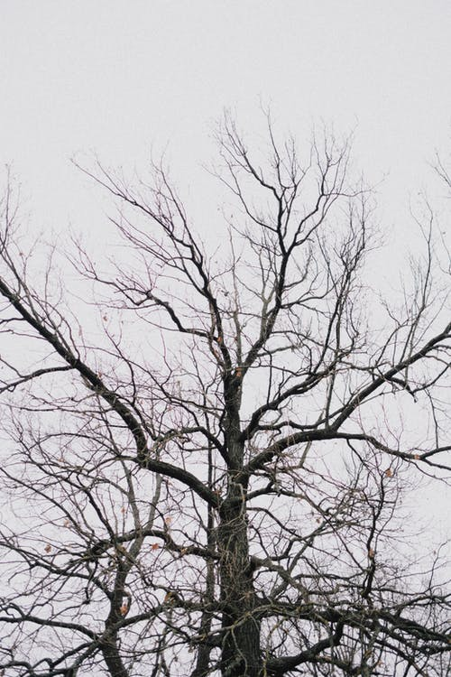 Leafless Tree Under White Sky