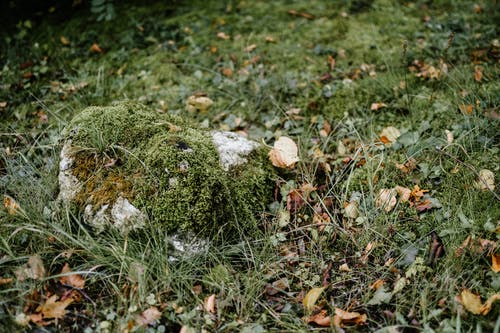 Mossy stone on grassy ground in woods