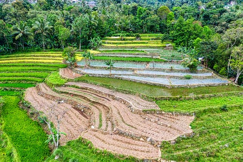Spectacular landscape of rice paddy fields terraces surrounded by lush green tropical trees in mountainous valley on sunny day