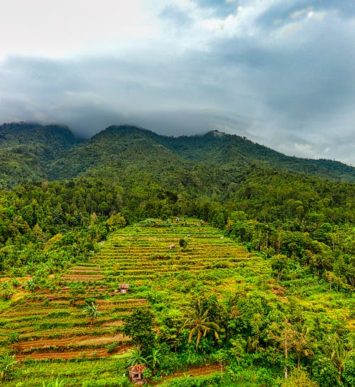 Rice plantation in mountain valley covered with tropical woods under overcast sky