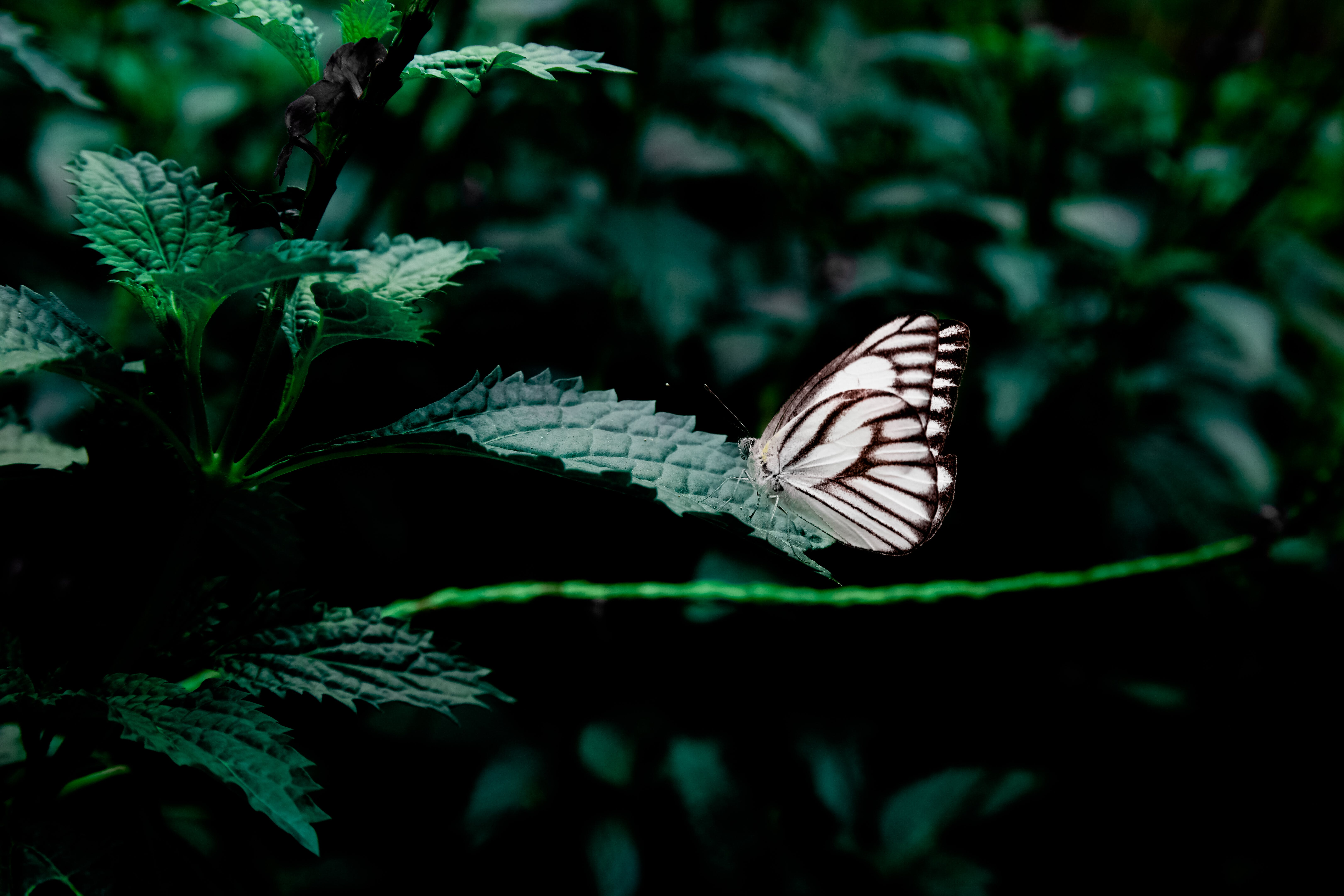 Free stock photo of forest, plant, insect, butterfly