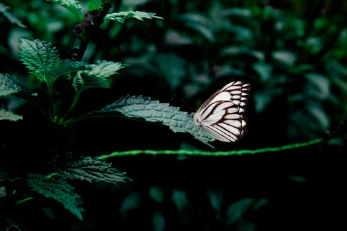 White and Black Butterfly Perched on Green Leafed Plant
