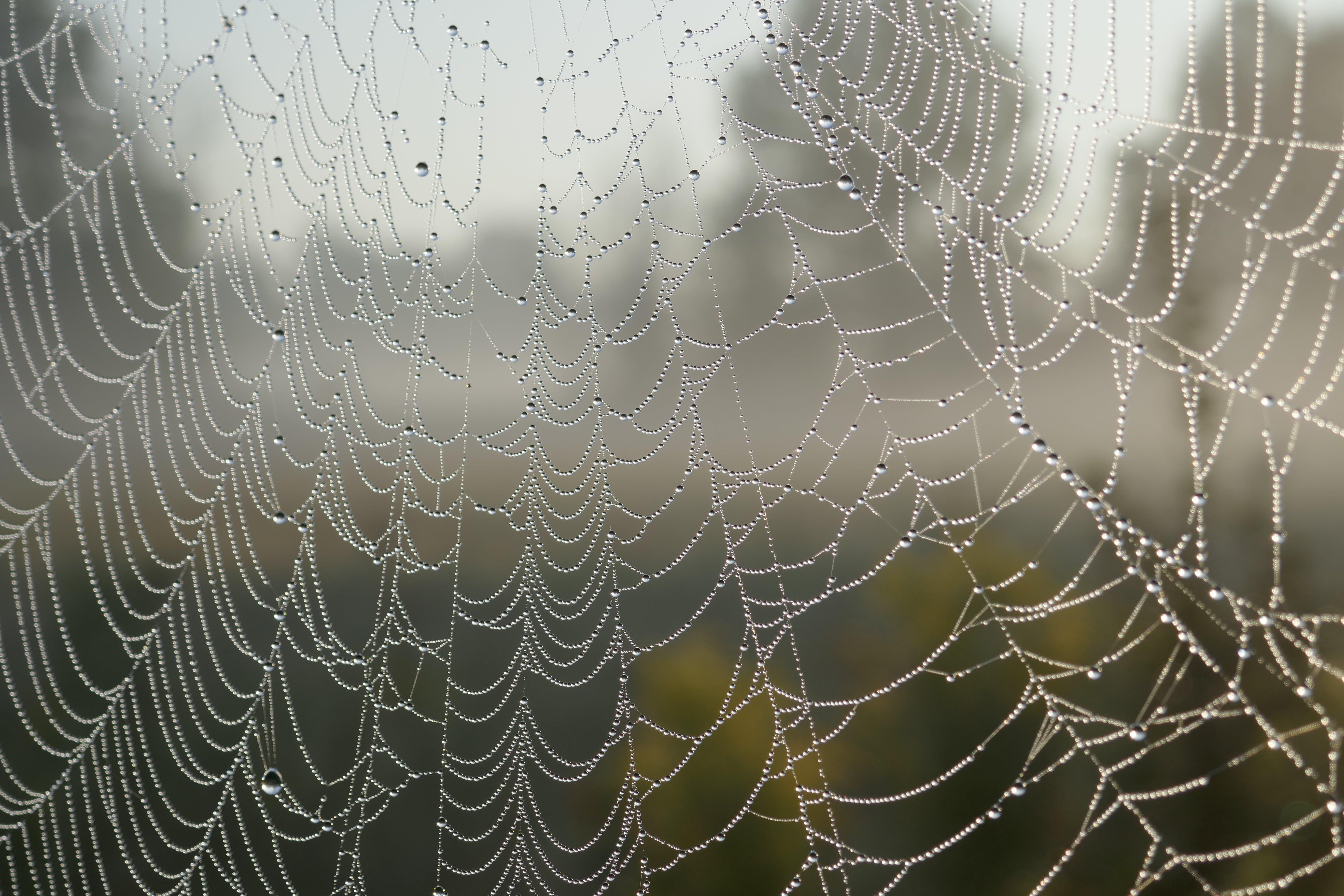 close-up, cobweb, macro