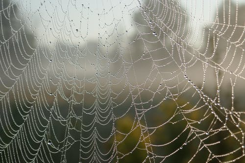 Shallow Focus Photo of Web