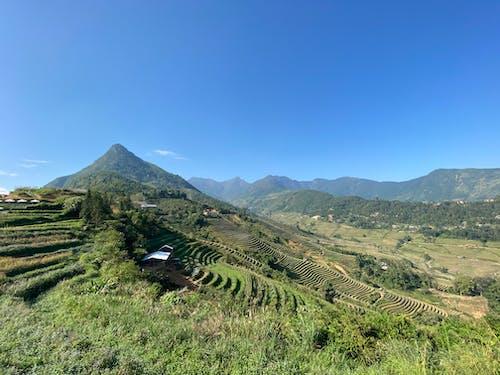 คลังภาพถ่ายฟรี ของ ข้าวเปลือก, ภูเขา, หมู่บ้านบนภูเขา, เวียดนาม